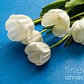 Tulip Flowers Over Blue by Edward Fielding