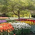 Tulip Garden by Eric  Schiabor