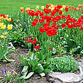 Tulip Gardenscape by Aimee L Maher ALM GALLERY