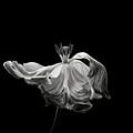 Tulip by Lotte Gr?nkj?r