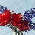 Tulip Macro 2 by Steve Purnell