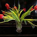 Tulip Mania 18 by Rosita Larsson