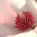 Tulip Tree Blossom by Carol Groenen