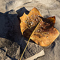 Tulip Tree Leaf - Frozen Raindrops In The Sunshine by Georgia Mizuleva