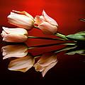 Tulip Trio by Photophilous