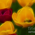 Tulips-6758-fractal by Gary Gingrich Galleries