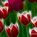 Tulips-6823-fractal by Gary Gingrich Galleries