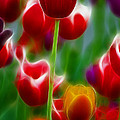 Tulips-7069-fractal by Gary Gingrich Galleries