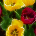 Tulips-7082-fractal by Gary Gingrich Galleries