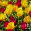 Tulips-7106-fractal by Gary Gingrich Galleries