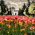 Tulips And Building by Grace Grogan