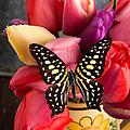 Tulips And Butterflies by Edward Fielding