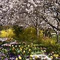 Tulips And Other Spring Flowers At Dallas Arboretum by Douglas Barnard