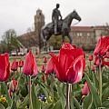 Tulips At Texas Tech University by Melany Sarafis
