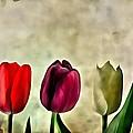 Tulips Color by Florian Rodarte