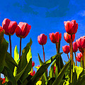 Tulips by David Gleeson