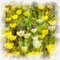 Tulips Everywhere by Kerri Farley