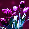 Purple Tulips by Silva Wischeropp