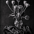 Tulips In A Vase Black And White by Endre Balogh
