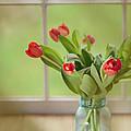 Tulips In Mason Jar by Kay Pickens