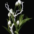Tulips In Tree Branch Still Life by Tom Mc Nemar