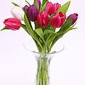 Tulips In Vase by Rosemary Calvert