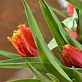 Tulips by Landry McKee