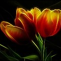 Tulips Of Light by Shannon Story