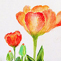 Tulips Orange And Red by Ashleigh Dyan Bayer