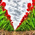 Tulips Part IIi by Alex Hiemstra