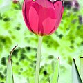 Tulips - Perfect Love - Photopower 2070 by Pamela Critchlow