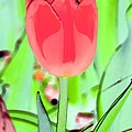 Tulips - Perfect Love - Photopower 2089 by Pamela Critchlow