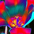 Tulips - Perfect Love - Photopower 2155 by Pamela Critchlow