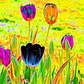 Tulips - Perfect Love - Photopower 2169 by Pamela Critchlow