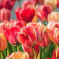 Tulips by Sylvia Rourke