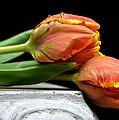 Tulips Together by Fraida Gutovich
