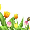 Tulips by Veronica Minozzi