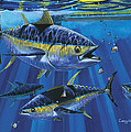 Tuna Blitz Off0039 by Carey Chen