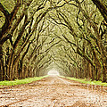 Tunnel In The Trees by Scott Pellegrin