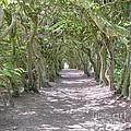 Tunnel Of Trees by Antony McAulay