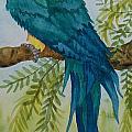 Turk Macaw by Kathy Przepadlo