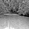 Turkey Creek Bw by JC Findley
