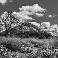 Turkey Hill Bw by David Cutts