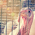 Turkey In The Cage by Caitlyn  Grasso