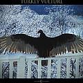 Turkey Vulture Sunning by Tim Nyberg