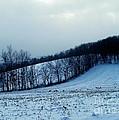 Turkeys In A Winter Field by Christian Mattison