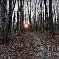 Turn Right At The Setting Winter Sun by Menega Sabidussi