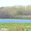Turquoise Marsh by Bonfire Photography