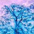 Turquoise Oak Tree by Priya Ghose
