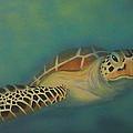 Turtle by Amanda Machin